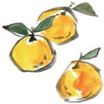 橘のかほり