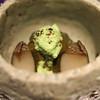 野嵯和 - 料理写真:蒸しアワビと松山産 長茄子 アワビの肝ソースと枝豆ソースで
