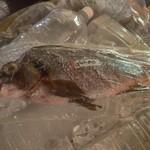 恩納つばき - 本日のおすすめ鮮魚