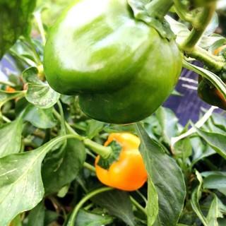 農家より直接仕入れる「オーガニック野菜」