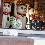 おざわ - 招き猫発祥の地で猫