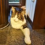猫の時間 - 右手かくれニャン