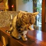 猫の時間 - ペロペロリン♡