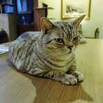 猫の時間 - つぶらな瞳★