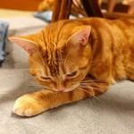 猫の時間 - 茶色い子