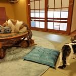 猫の時間 - 畳のお部屋