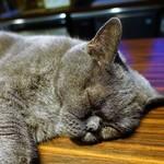 猫の時間 - イビキかいて寝てる子