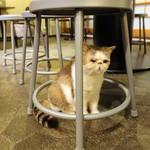 猫の時間 - 椅子の下にかくれんぼ