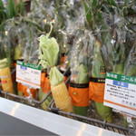 72772933 - 隣の棟では野菜が売られている