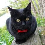 猫ちゃんおもてなしの宿 オーベルゼ レ・ボー - 黒猫ジジ♪