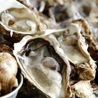 大厚岸 - 毎日直送される新鮮な牡蠣