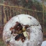 オリバー - ライ麦系ハード菓子パン