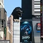 72959006 - 歌舞伎町のゴジラに似てるでしょ!