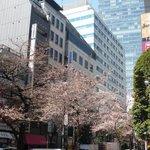 レストラン ワイワイ - 4月15日ころまで店内から桜が見えます。