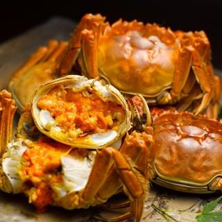 今が旬上海蟹(シャンハイガニ)を食べに行こう
