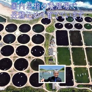 南九州市、種子島、屋久島で、無投薬で大切に育てています