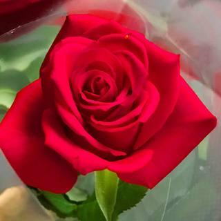 【ロマンチックな演出に】結婚記念日やお祝いに