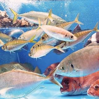 天神最大級の大型生け簀に魚が泳ぎまくるから、鮮度抜群!