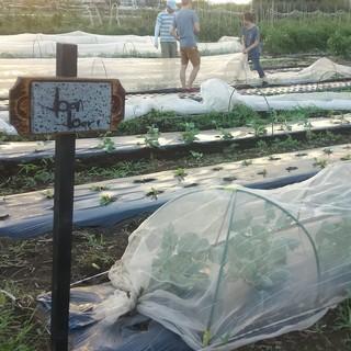 自社農園から無農薬野菜を直送しています!