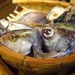 四十八漁場 -