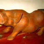 7350216 - トイレのアグー豚さん