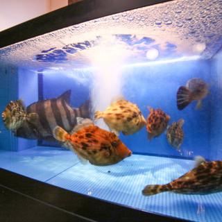 【生簀で泳ぐ今朝獲れ鮮魚】相模湾三浦港、下浦港、平塚港から