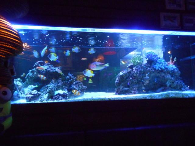 blue fish aquarium ブルーフィッシュ アクアリウム 京都市役所前