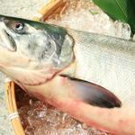 たけ山 - 秋鮭