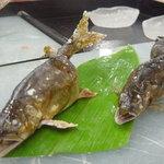 料理旅館 枕川楼 - 鮎の塩焼きです
