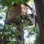 たぶの木 - ツリーハウス