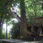 たぶの木 - ツリーハウスまでは階段(狭いので注意)