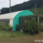 高木農園 -