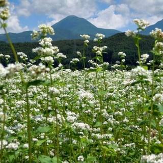 信州八ヶ岳の蕎麦粉と伊勢の宮川の地下水を使用