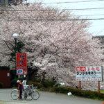 美福苑 - 駐車場の桜が満開