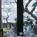 タベルネッタ アグレスト - 窓から桜