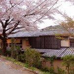 山水 - 春は桜が咲き乱れます。