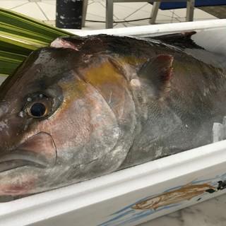 三崎港直送の新鮮な魚介