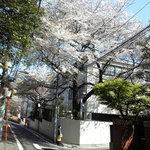 メーヤウ - 信濃町の桜