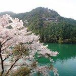 ドライブイン長谷川 - お店の前の桜美しい