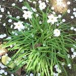 PATE屋 - 庭に散る桜