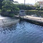 米沢鯉 六十里 - 店横の生け簀にたくさんの鯉が泳いでいました。