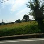 常陸屋 - 車窓から:蕎麦の畑
