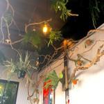 HANAYA NO TONARI NO ばる - 植物がたくさんの店内
