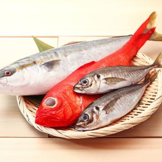 地元の漁港で朝穫れたばかりの地魚をご提供!