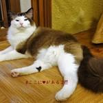猫の時間 - 足に♥がある子