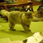 猫の時間 -