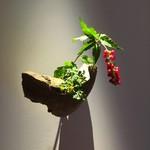 ゼンカフェ - 廊下の花