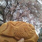 鯛八 - 桜とたいやき
