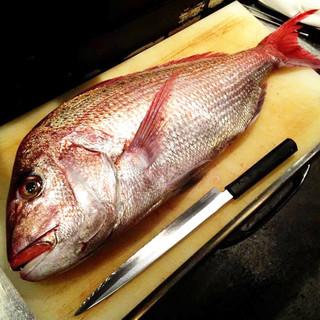 全国各地から仕入れた新鮮な魚が目白押し