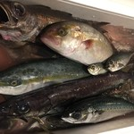 T26 - 全国の漁協より